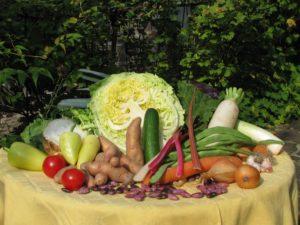 Die Bamberger Gärtner pflanzen miitten in der Stadt frisches Obst und Gemüse an